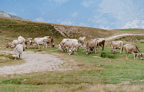 Alpe Foppa - Nágra - Piano di Mora